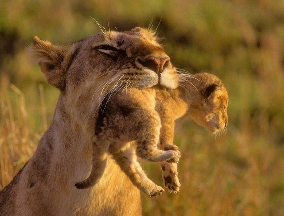 OS X Lion можно восстановить из Интернета