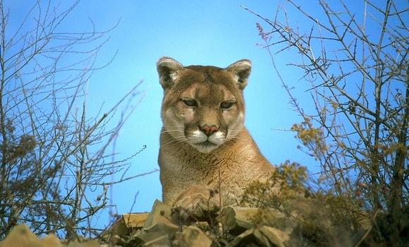 Опрос недели. Вы установили Mountain Lion?