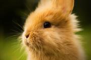 omg-cute-bunny-1