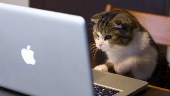 cat-working