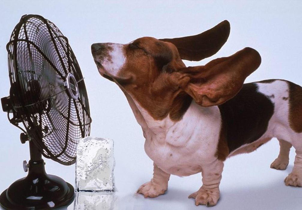 Как спастись от жары без кондиционера и вентилятора: 10 неожиданных способов