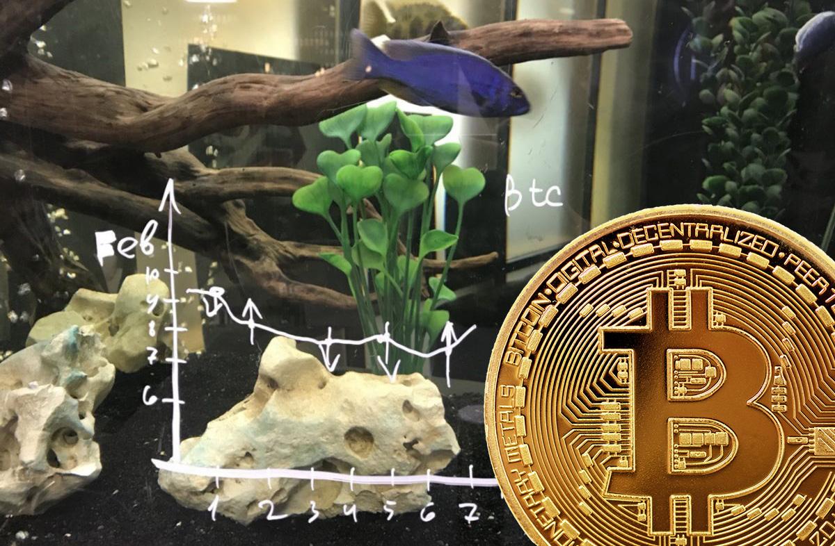 Рыбка, предсказывающая курс биткоина