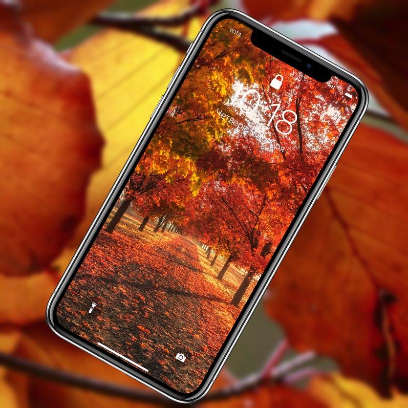 10 насыщенных осенних обоев iPhone