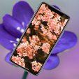 10 ярких весенних обоев iPhone. Майские в самом разгаре