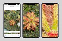 Фотографии в iOS 14 теперь можно увеличивать до мельчайших деталей