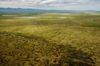 Арктика растаяла и зацвела впервые засотни лет. Спомощью дронов узнали, что это очень плохо