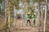 Apple потратит 200 миллионов долларов на восстановление лесов для борьбы с изменением климата