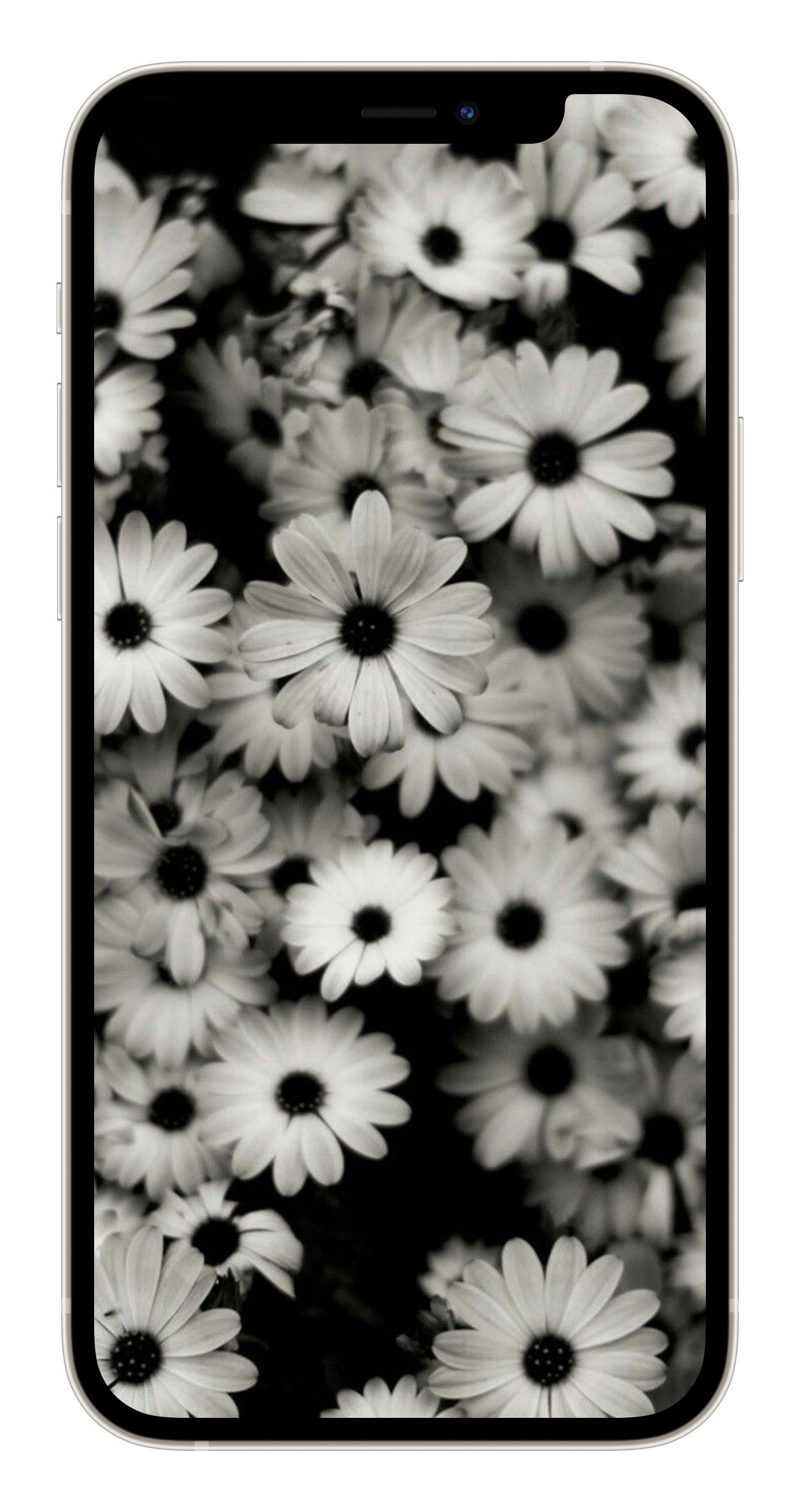 10 необычных черно-белых обоев для iPhone