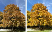 Сфотографировали осень на iPhone 13 Pro Max и Samsung Galaxy Fold3. Вот это разница!