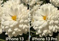 Сравниваем камеры по фотографиям: iPhone 13 против iPhone 13 Pro. Нашли разницу без лупы